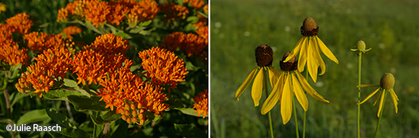 orange flowers and yellow flowers with brown centers