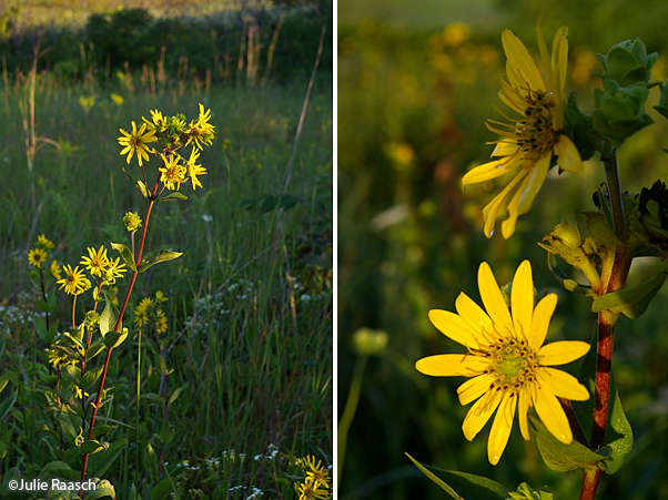 yellow flowers in green grass