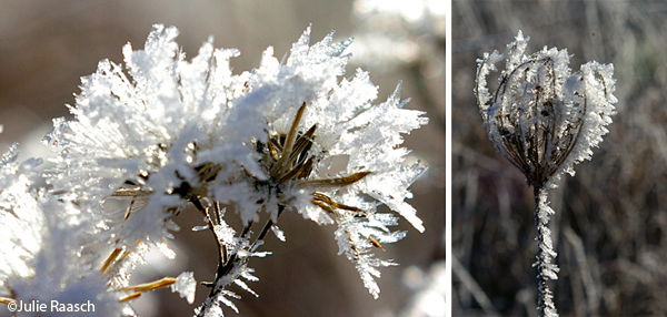 frost covered plants
